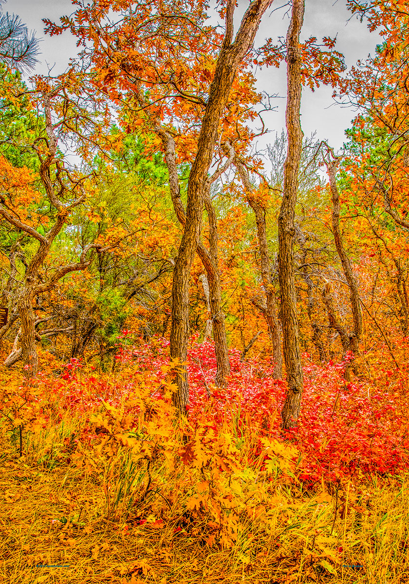 Fall at Browse 40 x 28
