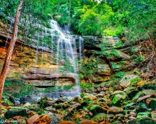 Rainforest-Falls4